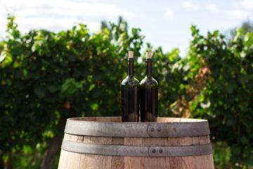 Wine Tour con visita e pranzo