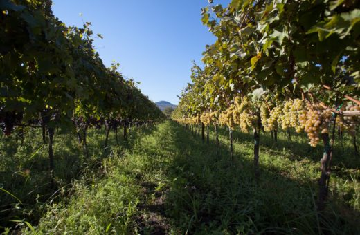 The volcanic soil of Etna DOC wines