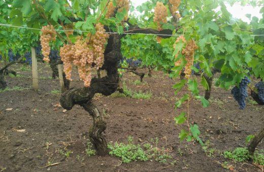 Wine tourism on Etna