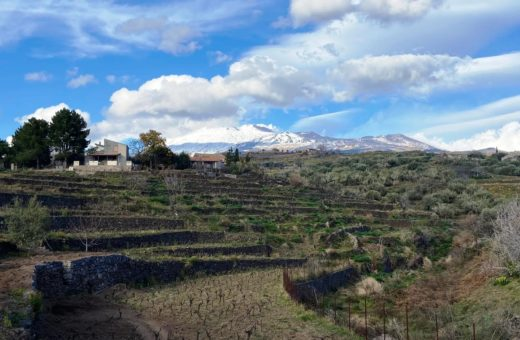 The soil and the Etna wines