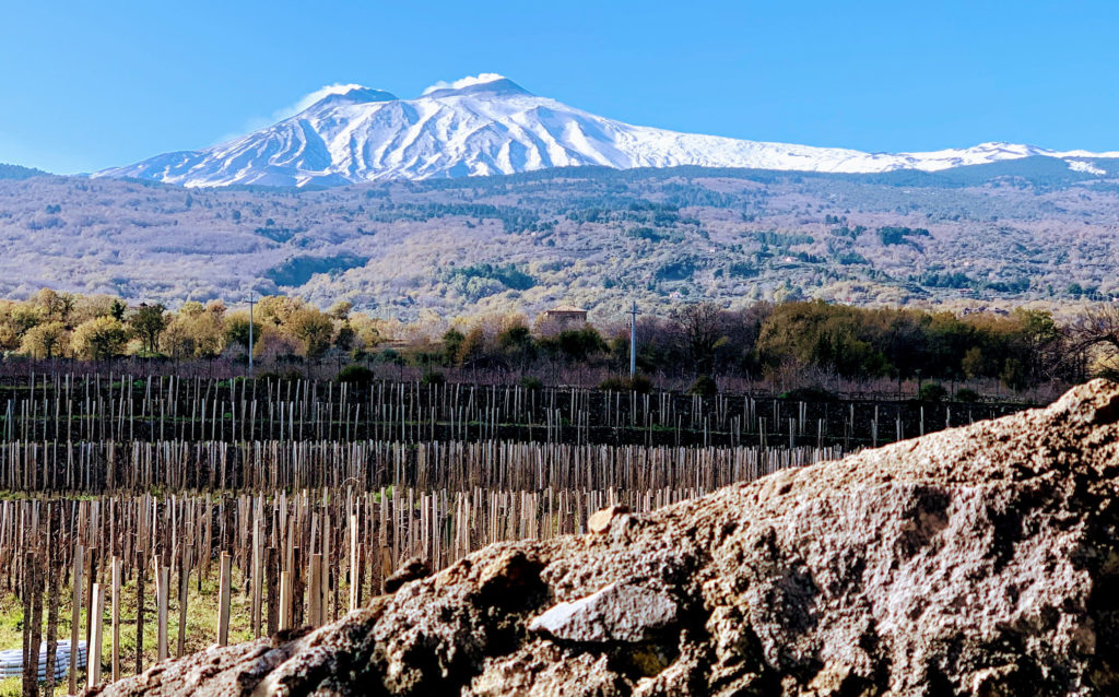 The Etna lava embracing the vine