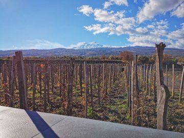 Pranzo completo con Degustazione Vini Etna e Tour del Vigneto