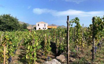 Cooking class sull'Etna e degustazione di vini